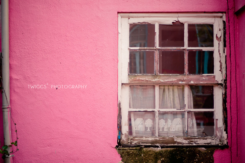 the {pink} window