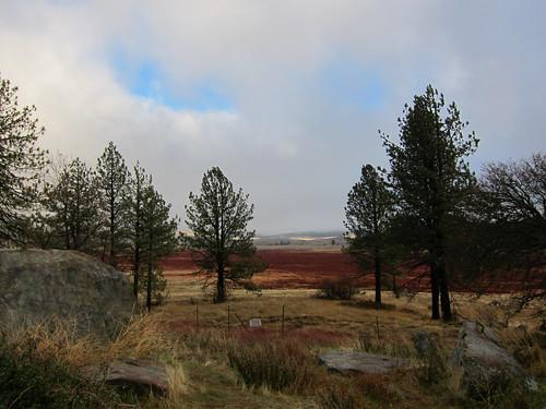 Julian, CA, pine trees, meadow IMG_9251