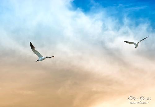 cruise blue sunset sky cloud galveston beach yellow ferry port canon bay ellen fly texas seagull bolivar explore around hdr flew yeates explored mygearandme