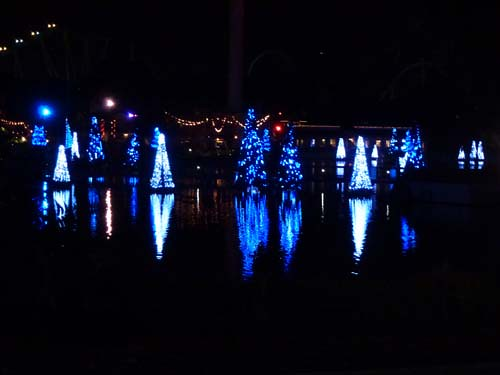 Sea of Trees SeaWorld Christmas Celebration Photographer Eileen Ludwig