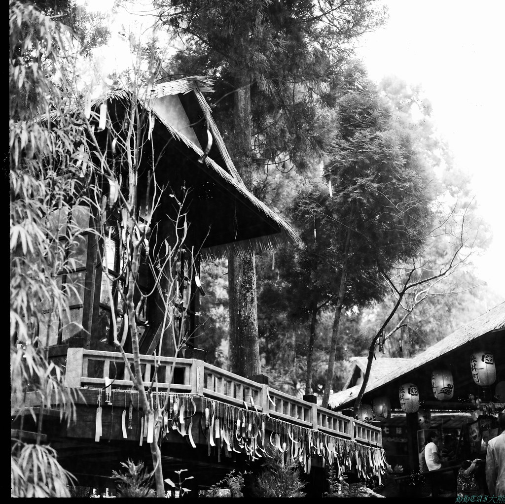 一月十七日放晴的溪頭、杉林溪