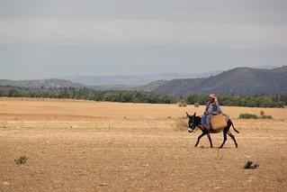 Gaâfour - Paysan en route vers la ville (09_2011)