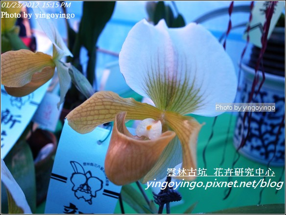 雲林古坑_花卉研究中心20120123_R0050686