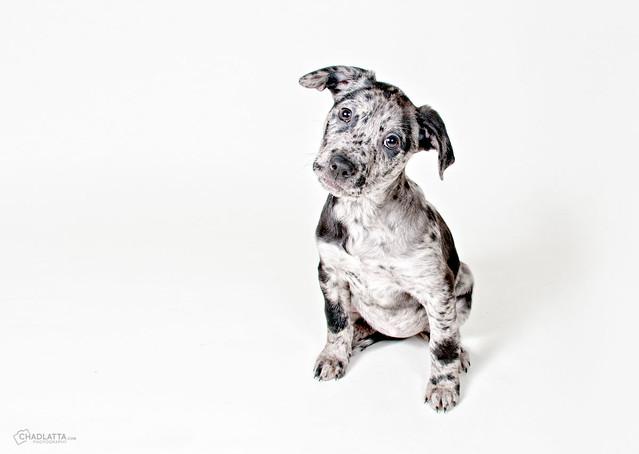 Meg Cat Dusty Dog