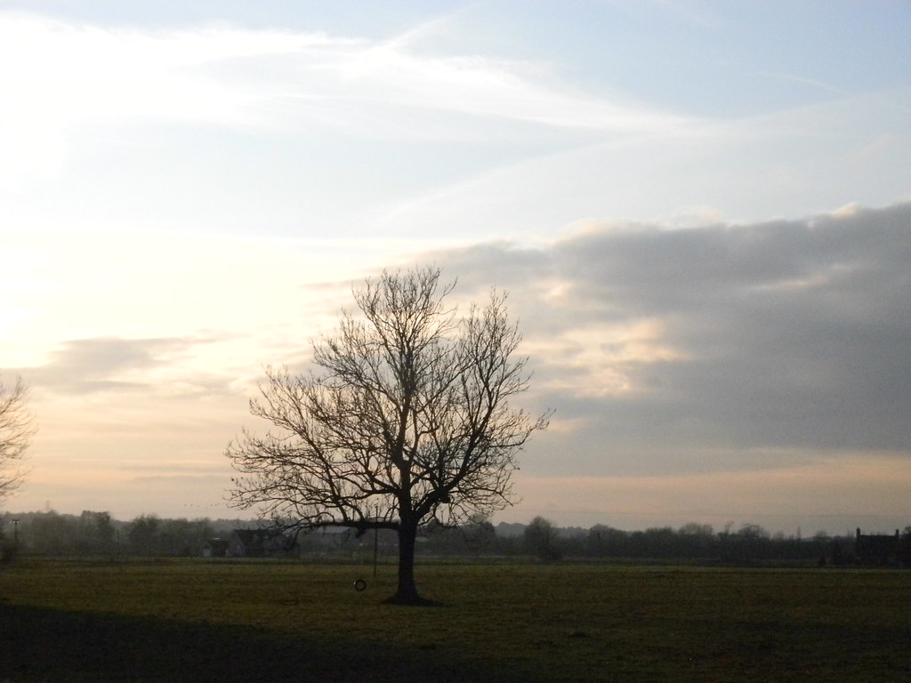 Lone tree Aldermaston to Woolhampton