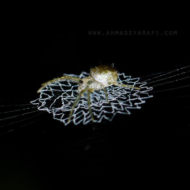 Resting on The Cobweb