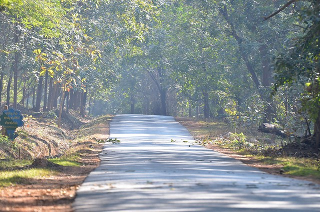 Wooded Forest path on the way to Haliyal from Dandeli, 28JAN2012