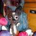 needle felted Chihuahua5 (1)