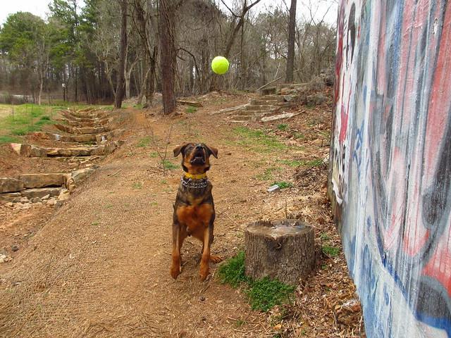 Dog contemplating floating orb