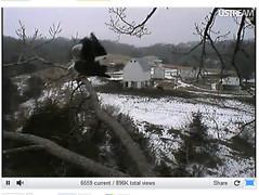 Decorah Iowa Bald Eagle Nest Camera