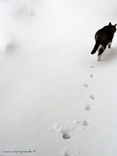 Il mio gatto Lucky nella neve dopo la grande nevicata febbraio 2012 a l'Aquila