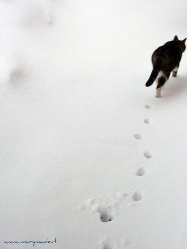 Cat prints in the snow
