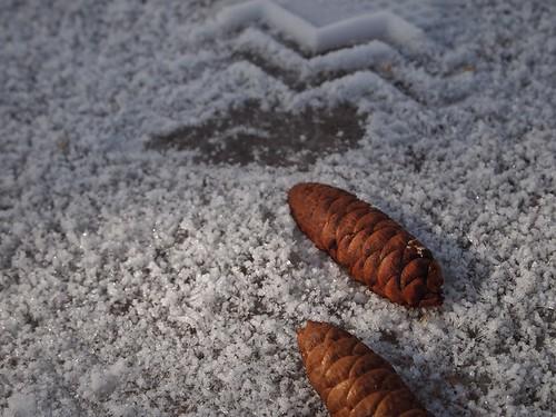 chevrons + pine cones