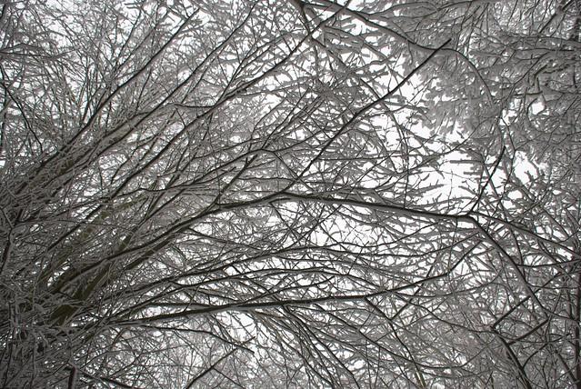 snow in rye DSC_3267_1