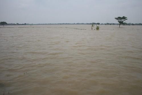 Areal persawahan yg terendam di Cilebar, Karawang. Foto : Marwan Azis/BeritaLingkungan.com