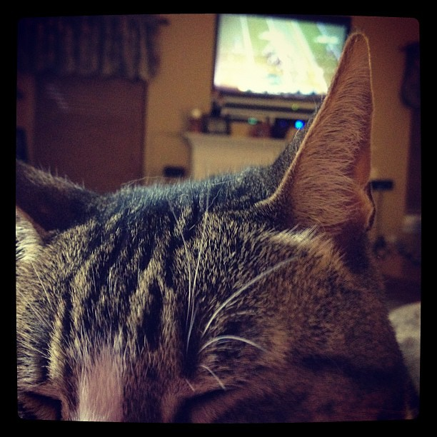 Kitty cat laying on my chest while I watch the Super Bowl.