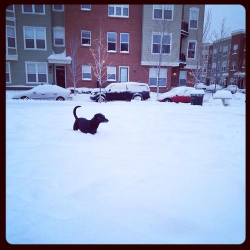 Feb. snow