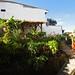 Small photo of Colombia: Hostel Tralala in Salento