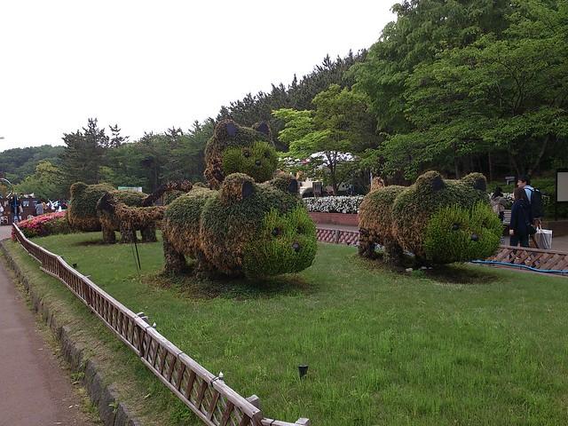 レッサーパンダの植木(トピアリー)