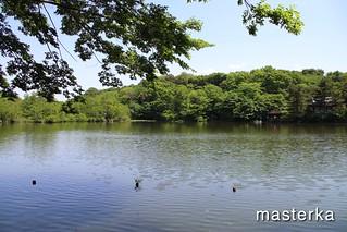 石神井公園の池2