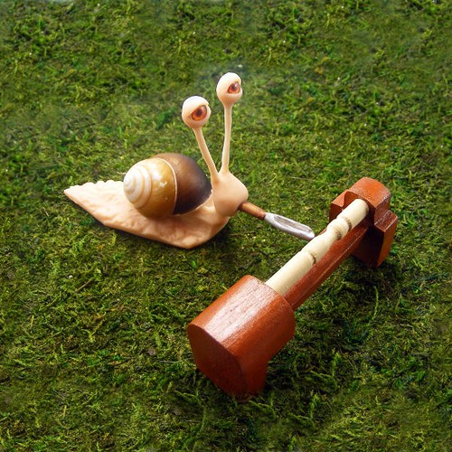 woodworker snail