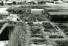 main_north_road_560_vadoulis_garden_centre_storm_damage_1969or1970_nwV1.03