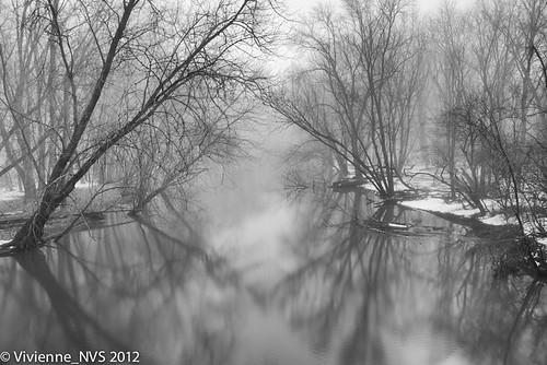 fog river illinois preserves lakecounty foggyscenes wrightwoodsforestpreserve desplainsriver lcfpd