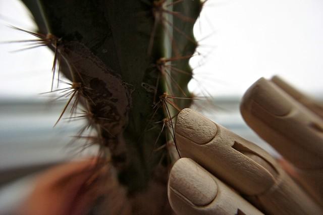 anteketborka_cactus2