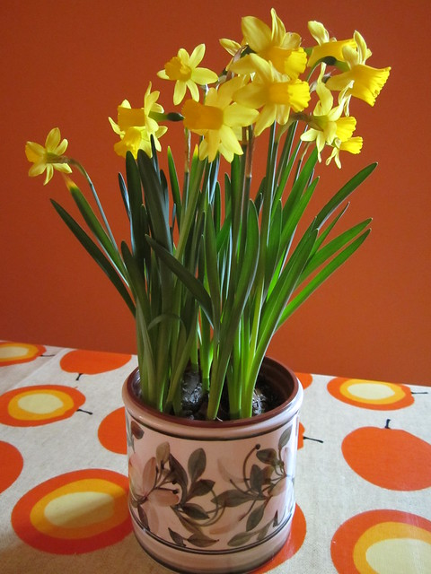 spring daffs (5)