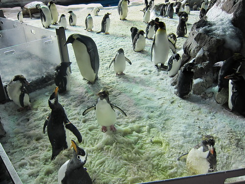 Lots o' penguins