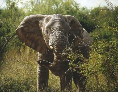 """'Elephant Feeding' oil on board 19¾"""" x 24"""