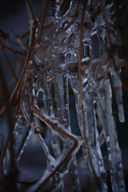 ice on plants