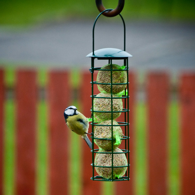 130312_ a tit on the fatballs