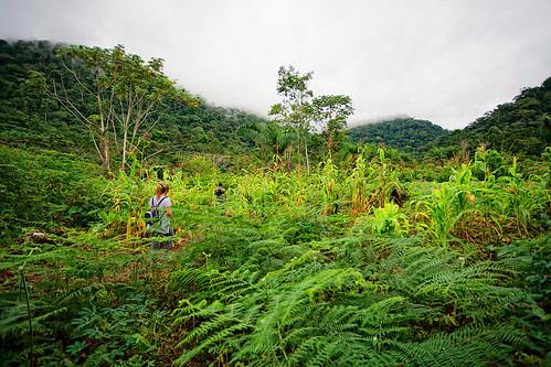 africa árboles selva paseo bosque monte niebla guineaecuatorial jungla paraje
