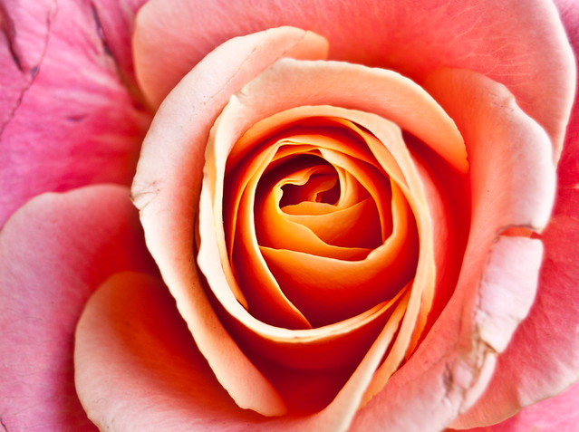 Roses are soft