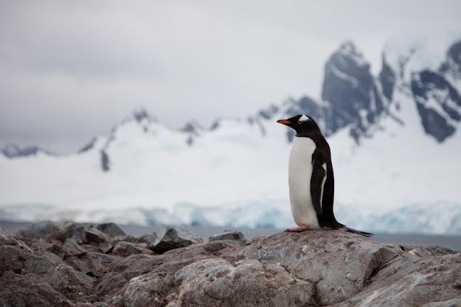antarctica-blog-54