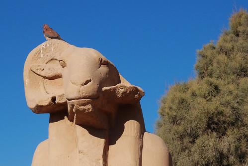 Luxor_karnak33