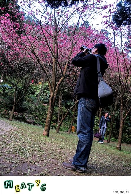 【遊記】陽明山國家公園|櫻花乍現在粉紅意境的花花世界10