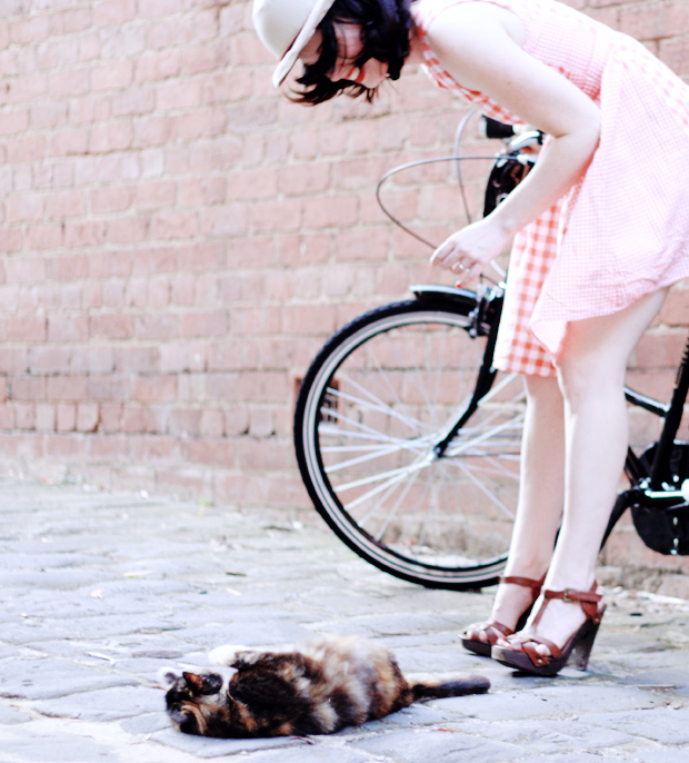 cats bikes gingham e