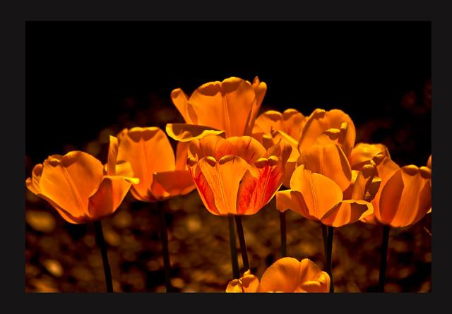 Flores a contraluz, Nikon COOLPIX S4150