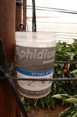 裝設在IPM農法青椒田內的益蟲罐