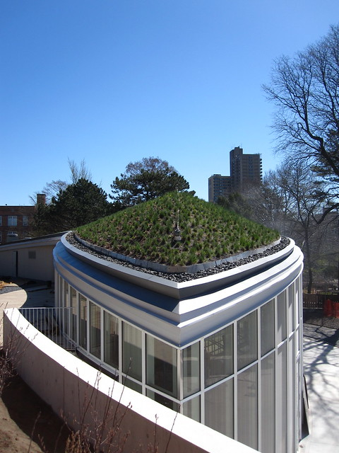 The green roof on BBG's new Visitor Center shortly before construction is complete. Photo by Rebecca Bullene.