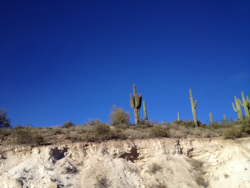Cactuses!