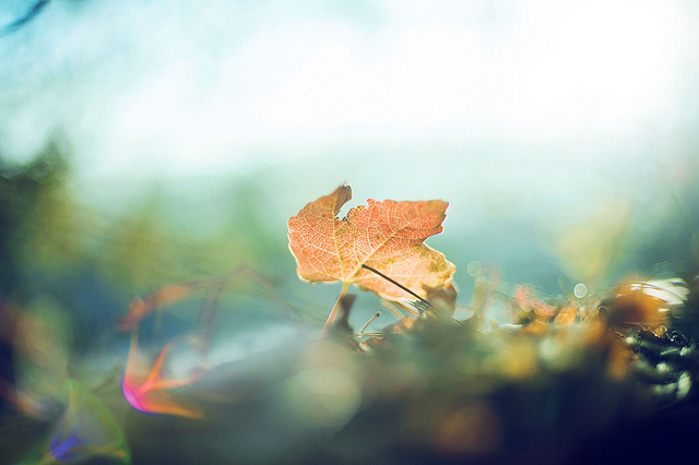 Soft dreamy photography of Lisa Epp