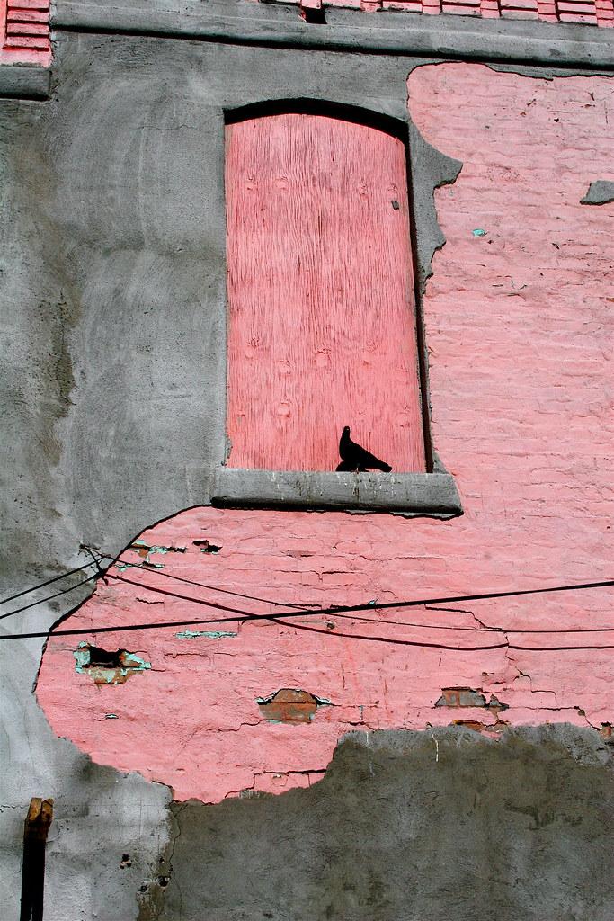 Pigeon of El Paso