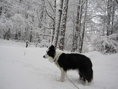 雪が降っていても外がいいね☆ by Poran111