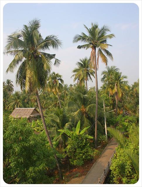 Bang Namphueng Palm Trees Bangkok
