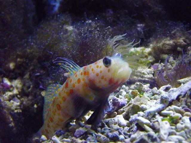 weird looking fish.   Flickr - Photo Sharing!