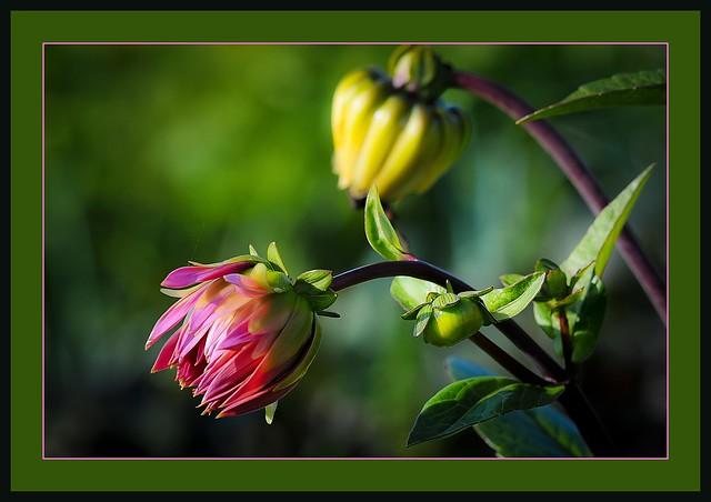 Promesse de fleurs flickr photo sharing for Promesse de fleurs