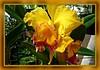 Orquídea........P1090099